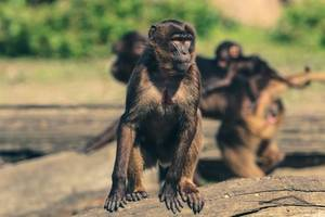 zoo: ungewöhnliche freundschaft! süße tiere sorgen für verwunderung