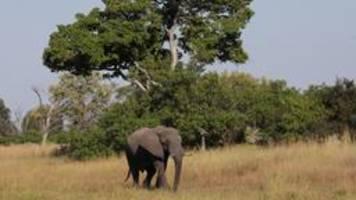 Ölsuche in namibia schürt sorgen der bevölkerung