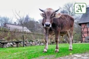 """Protestaktion: """"Fridays for Goofy"""": Tierschützer planen Demos in Hamburg"""