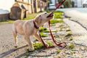 FOCUS-Online-Dogcast - Hunde-Erziehung: Der Mensch ist kein Wolf, verhaltet euch also auch nicht so!