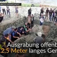 video: 5000 jahre alt? wal-skelett in fast perfektem zustand gefunden