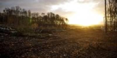 Rolle der Grünen bei Wald-Rodung: Rechtsstaat vs. Recht haben