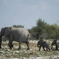 bund weist auch namibia und estland als corona-risikogebiet aus