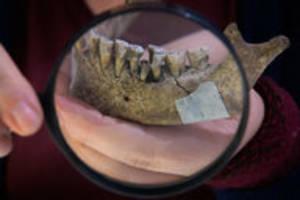 archäologischer fund in der uckermark: die dame aus der jungsteinzeit