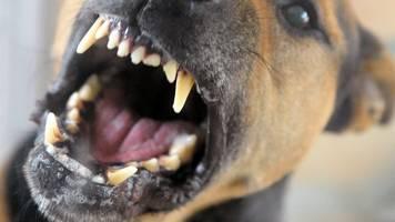 mehr hundebisse in brandenburg: weniger verletzte menschen