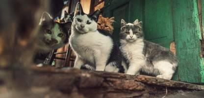 animal hoarding: was macht menschen zu exzessiven tiersammlern?
