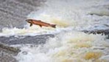 Artensterben: Einheimische Tierarten durch Klimawandel stark bedroht