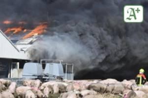 Brände: Brand in Schweinezucht: Fahrlässige Brandstiftung?