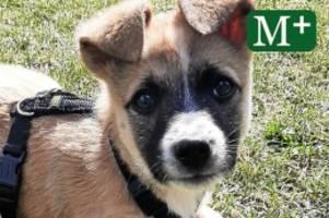 Tiere in Berlin: Zehn Fälle von tödlichen Hundeködern seit Anfang März