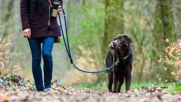 mehr hunde in sachsen-anhalt registriert