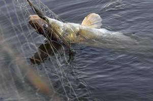 Alternative zur traditionellen Fischerei: Die Aquakultur hat Hochkonjunktur