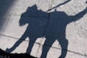 Stuttgart - Hund bei Unfall mit Radfahrer getötet - Mann fährt einfach weiter