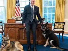 nach beißattacke im weißen haus: bidens hund major erhält spezialtraining