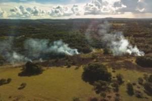 Deutschland mischt kräftig mit: EU-Importe verursachen Tropenwald-Abholzung in großem Ausmaß