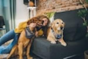 focus-online-dogcast - wer am lautesten bellt, hat nicht immer recht! tipps für den umgang mit dem zweithund