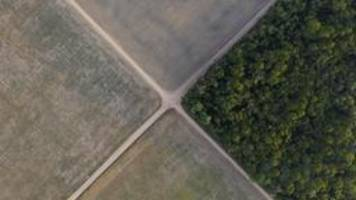 WWF-Bericht: EU ist weltweit zweitgrößter Waldzerstörer