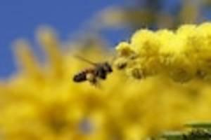 Niedersachsen - Sechs Bienenvölker verbrannt: 180.000 Tiere tot - Polizei sucht Täter