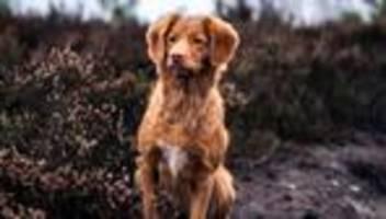 hundenamen: hündchenschema