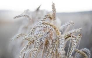 Krankheit Zöliakie: Steckt Gluten hinter dem andauernden Bauchweh?