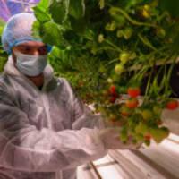 fluence, delphy improvement center kündigt erdbeerforschungsstudie an