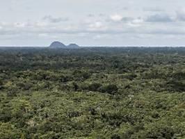 Emittiert mehr CO2, als er nimmt: Amazonas-Wald kippt in die Negativ-Bilanz