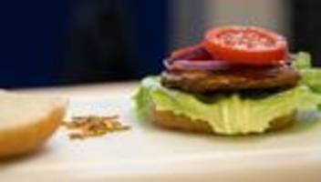 insekten-snacks: eu lässt mehlwürmer als lebensmittel zu