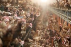 Erdüberlastungstag: Umweltschützer kritisieren Ressourcenverbrauch