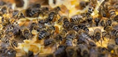 EU-Gerichtshof bestätigt Verbot von Insektiziden - Urteil gegen das Bienensterben