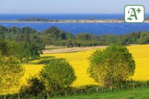 Klimawandel: Gibt es bald keine Rapsfelder mehr in Schleswig-Holstein?