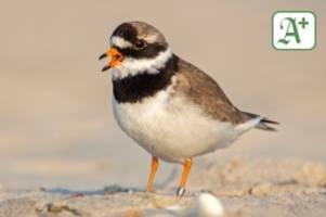 Nordsee: Sturm Eugen zerstört Eier von Küstenvögeln im Wattenmeer