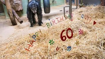 Einer der ältesten Schimpansen lebt im Zoo Saarbrücken