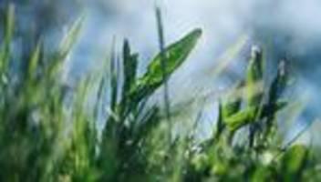 wildkräuter: die frühlingswiese ist die beste salatbar