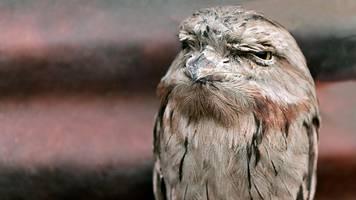 thüringen: forscher haben frohe botschaft für schräge vögel