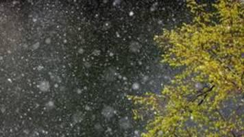 wetter: schnee statt frühling in berlin und brandenburg