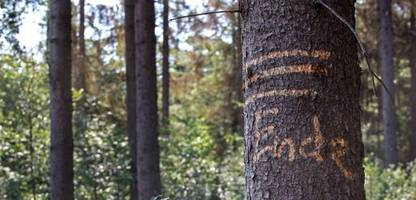 Holzpreis-Anstieg: Waldbesitzer-Lobbyist warnt Branche vor Kleinkrieg