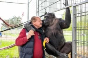 freizeit: zirkus belly als zoo: familien besuchen tiere im quartier