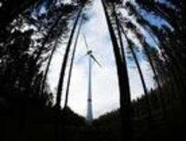 Wenn saubere Energie den Wald zerstört