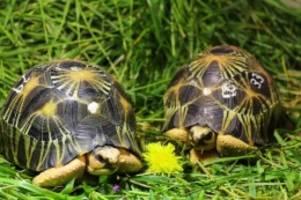 tiere: neue heimat für geschmuggelte schildkröten im tierpark