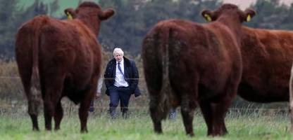 großbritannien: wird premier boris johnson zum könig von kleinbritannien?