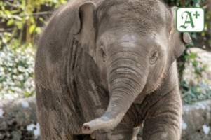 tierpark hagenbeck: wenn hamburgs zoo-tiere geburtstag feiern