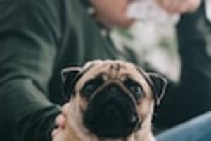 definition, symptome, behandlung - hundehaarallergie: muss ich meinen vierbeiner tatsächlich abgeben?