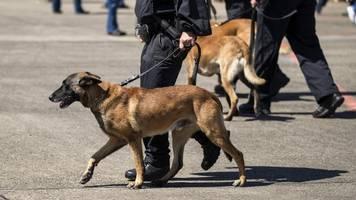 Karlsruhe: Brüder verletzen Polizisten und Diensthund