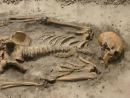 dna-untersuchung an skeletten: forscher spüren wikinger-verwandte auf
