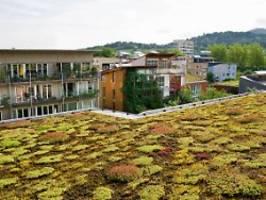 neubauten künftig bepflanzen: eu-parlament fordert gesetz für artenschutz