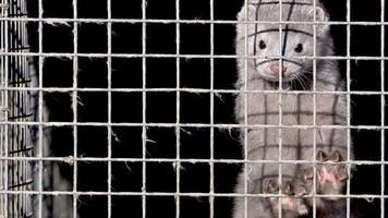 tierschutz: israel verbietet als erstes land pelzhandel