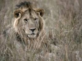 Kolumne Ende der Reise: Querdenker auf Safari