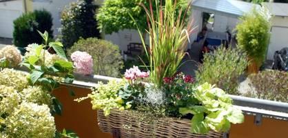 Bewässerung für den Balkon - Die besten Systeme im Überblick