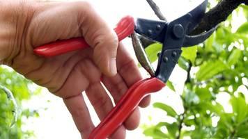 BGH-Urteilt: Nachbar darf überhängende Äste abschneiden