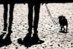 arag rechtsexperte tobias klingelhöfer - ist hundegebell ruhestörung? das gilt rechtlich für ihre vierbeiner