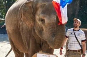 Tiere: Elefanten-Orakel tippt auf Frankreich-Sieg gegen Deutschland